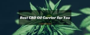 Best CBD oil carrier for you