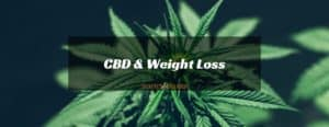 Lose Weight with CBD